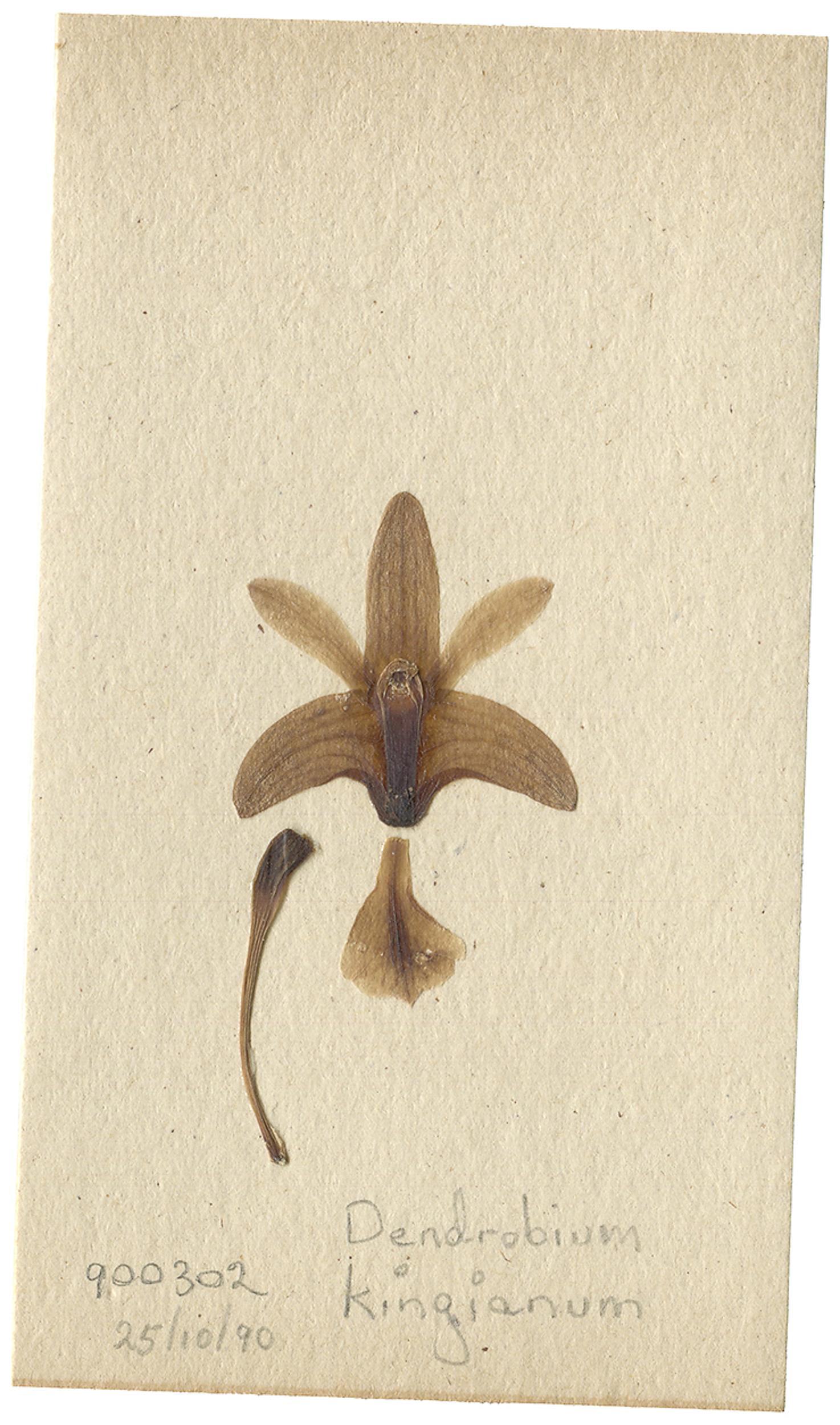 LYON 2017-06-24 Phils Orchid Specimens 287_D.jpg