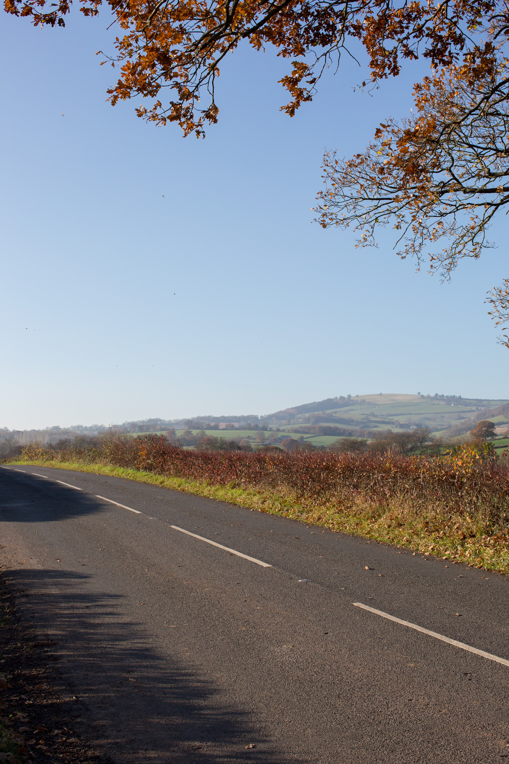 autumn road 2.jpg