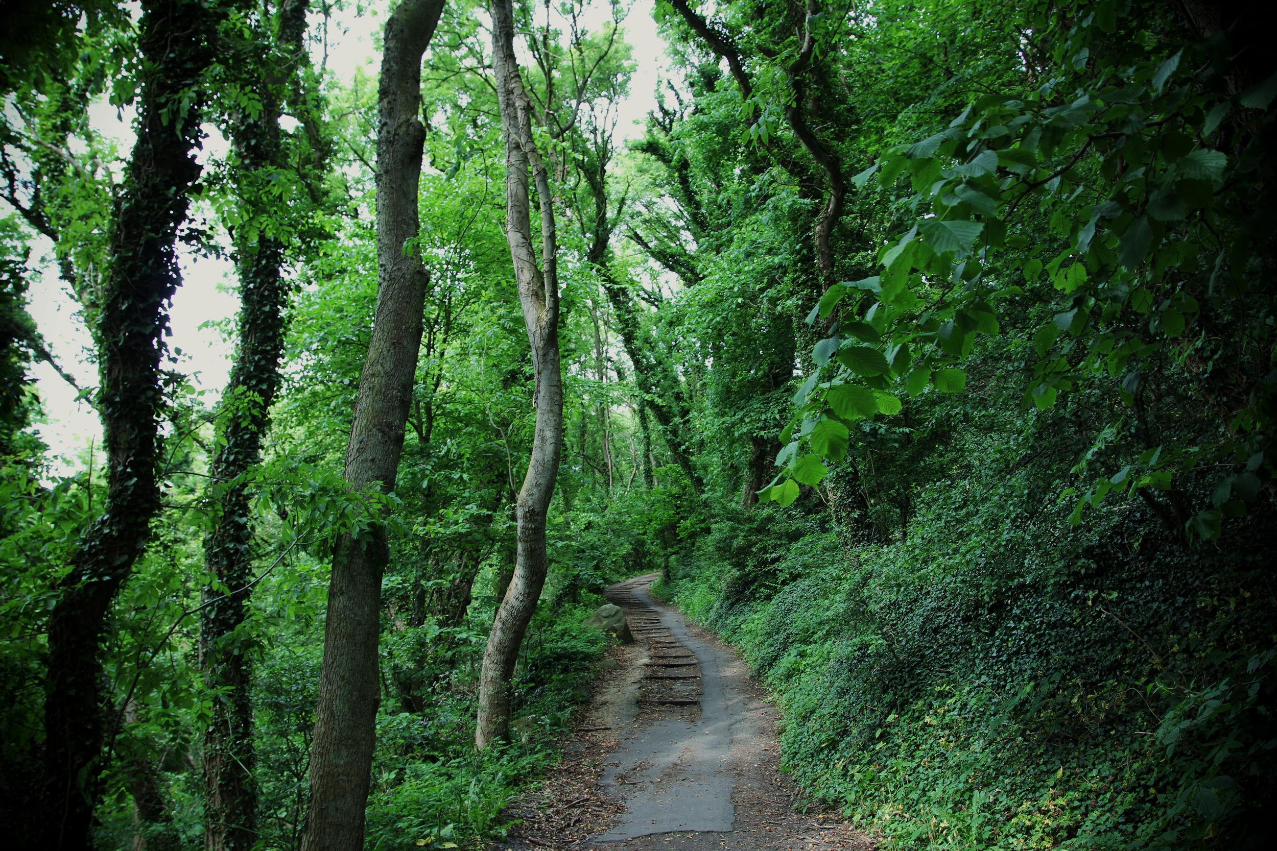 2015_07_Life-of-Pix-free-stock-photos-nature-green-trees-juliacaesar.jpg