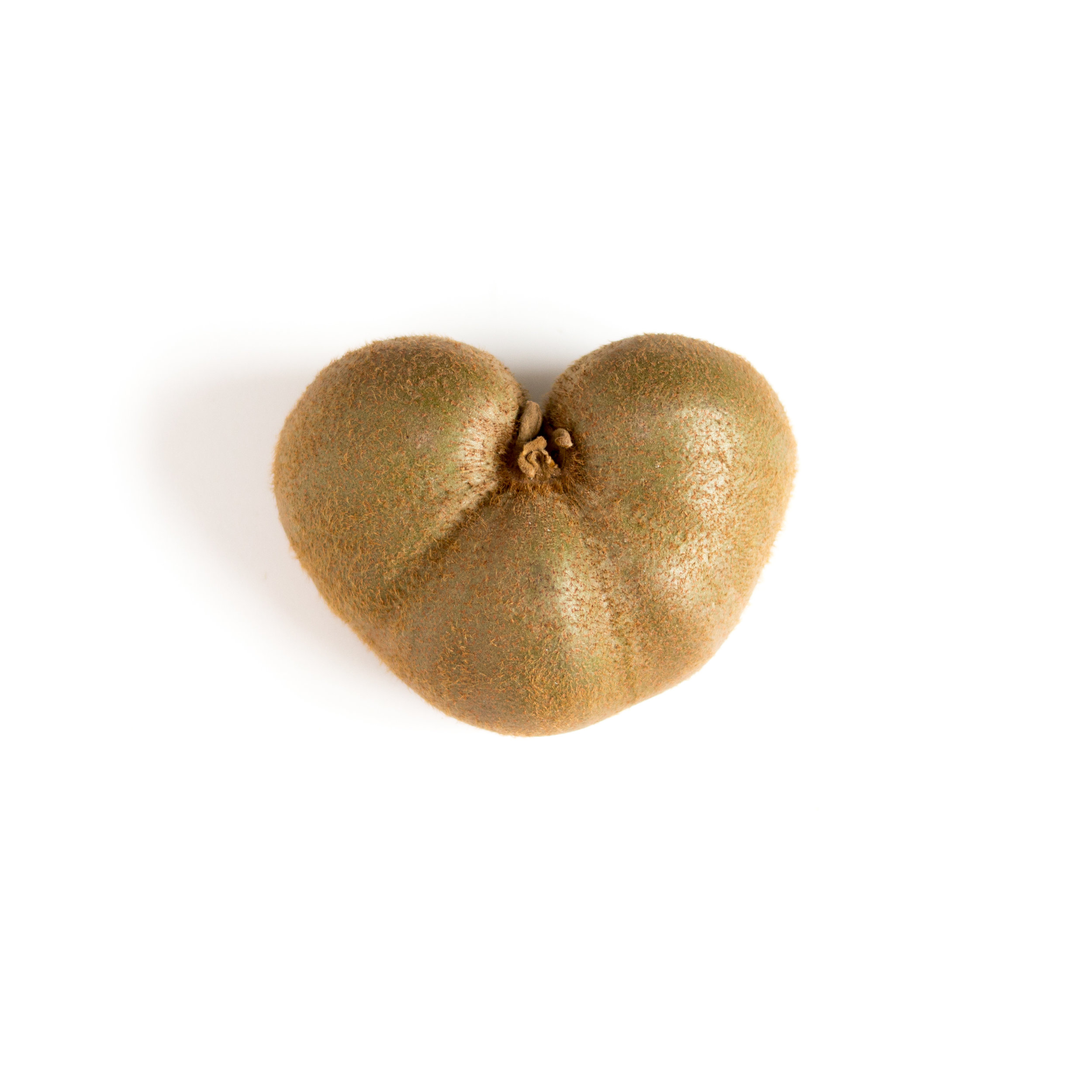 HEART Kiwi (2).jpg