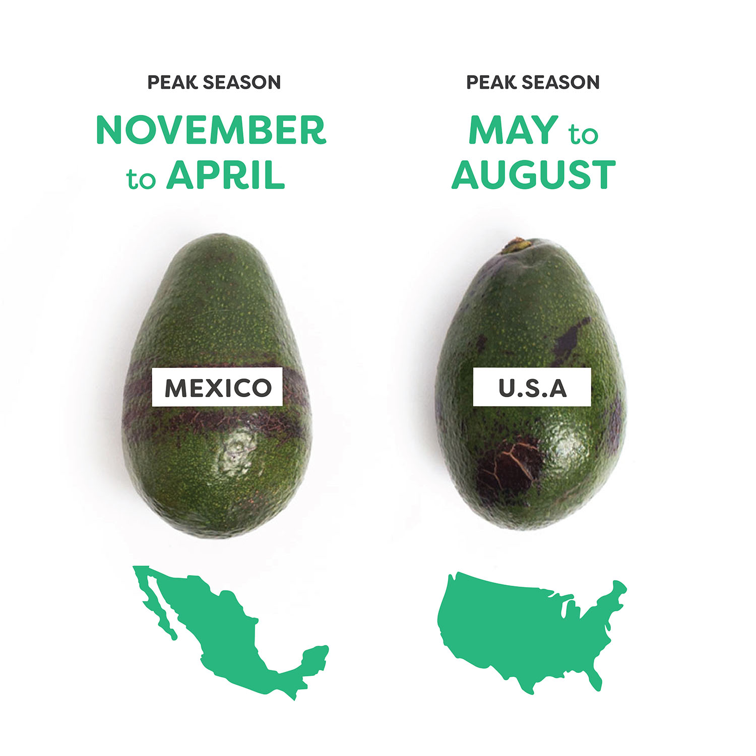 When Are Avocados in Season? — THE IMPERFECT DIGEST