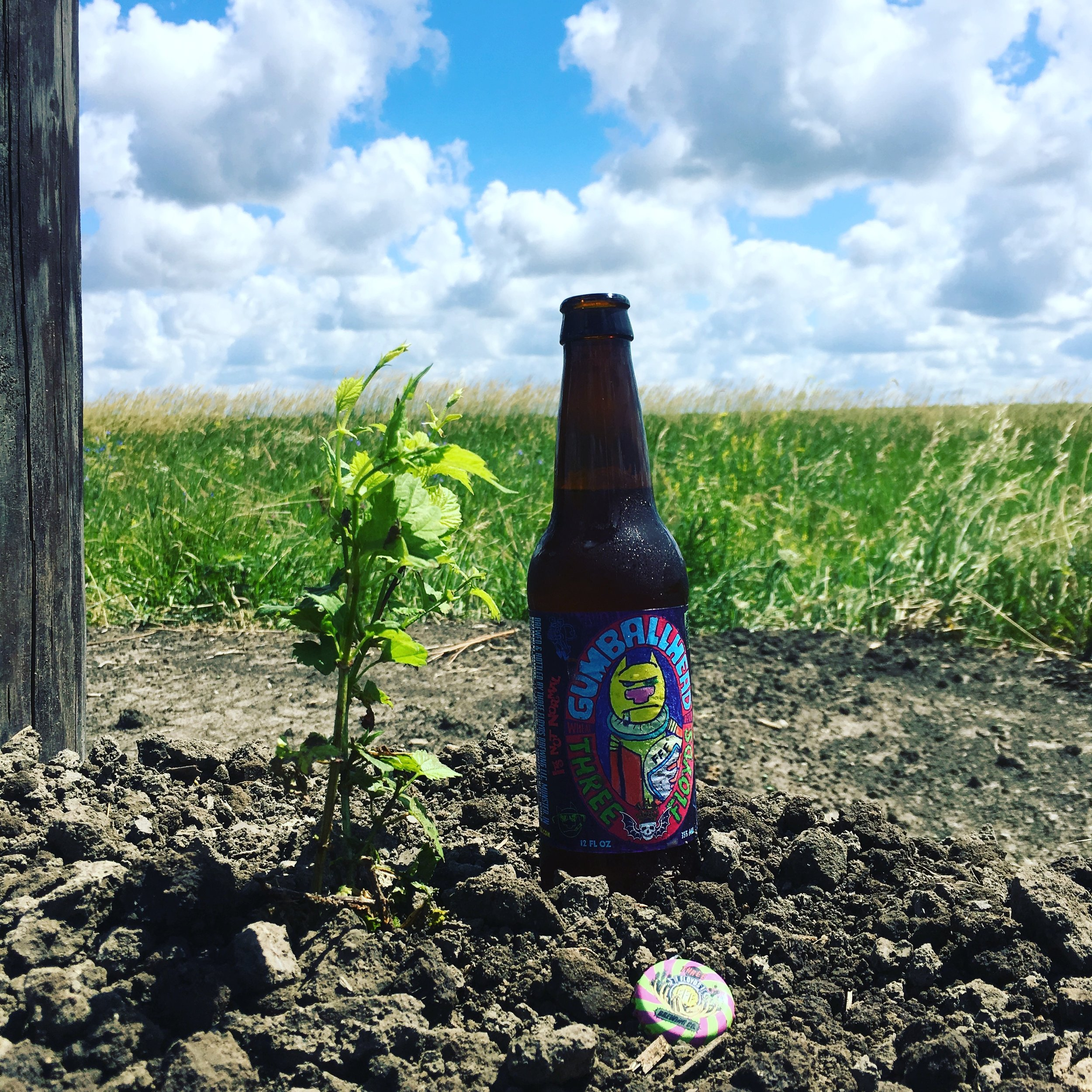 Last hop planted, first beer downed.
