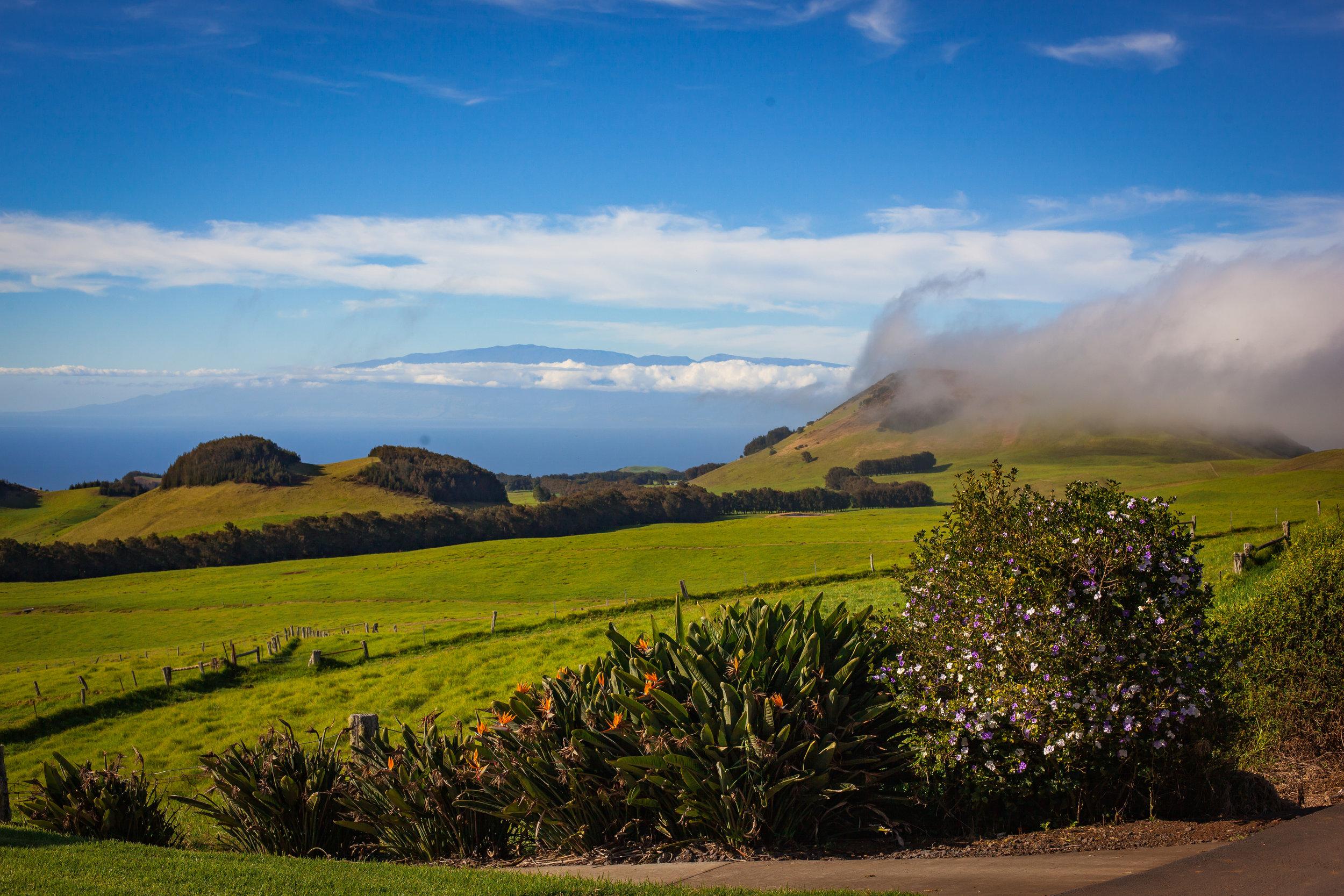 big island hawaii kahua ranch wedding © kelilina photography 20170106155039.jpg