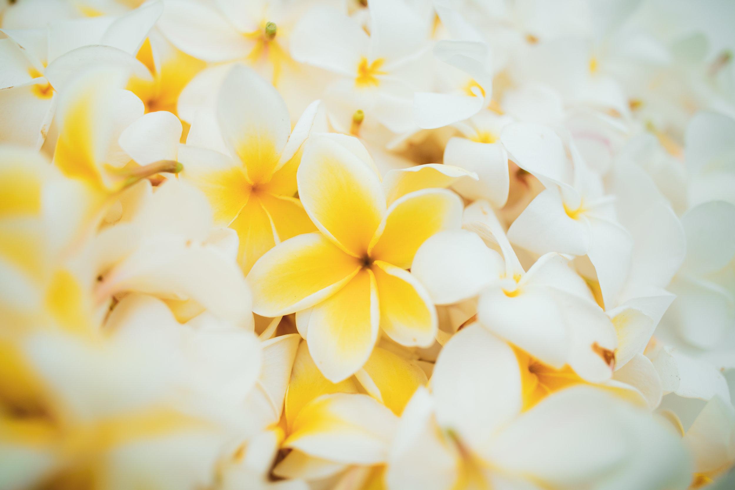 big island hawaii royal kona resort wedding kelilina photography 20190309170003-1.jpg