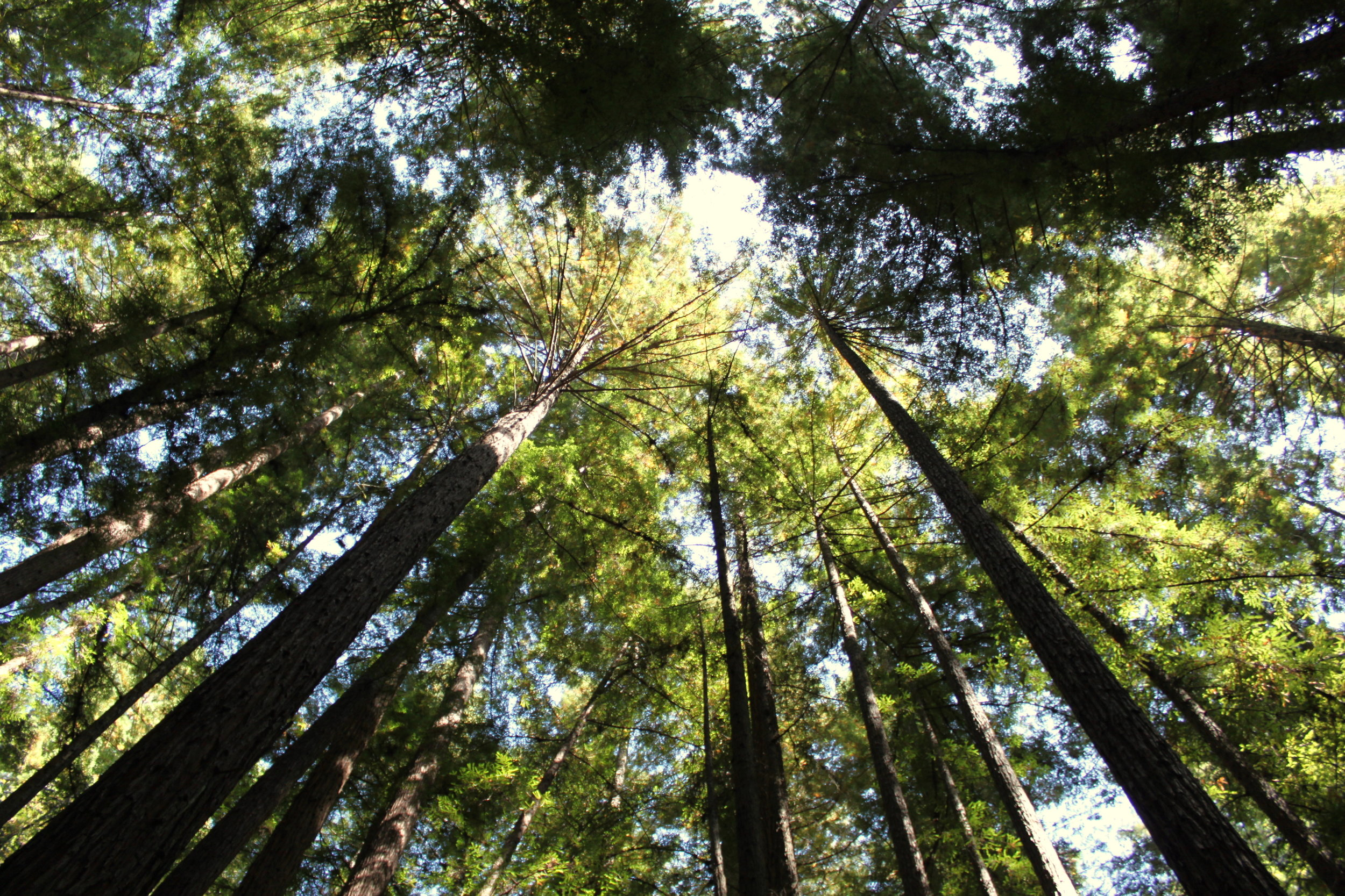 2 tickets on a small group Sonoma Wine Tasting & Redwoods Tour at Evergreen Escapes