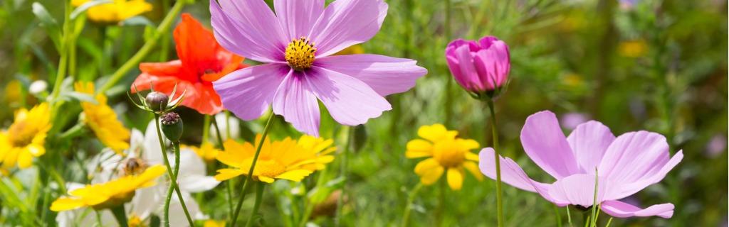 beautiful-wildflowers-growing-in-a-meadow-picture-id847811990.jpg