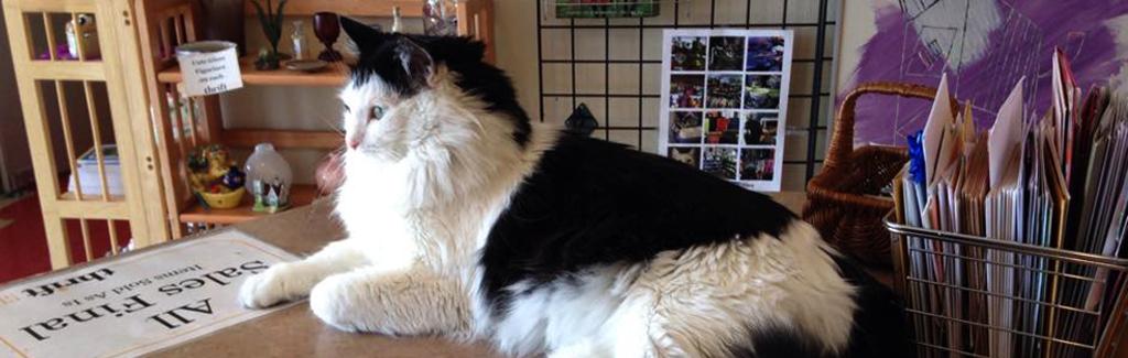 CAT Thrift Store Photo1.jpg
