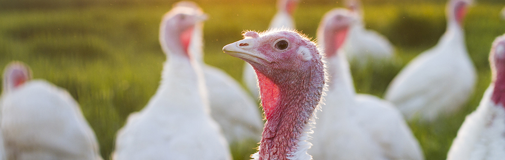 TurkeyPhoto1.jpg