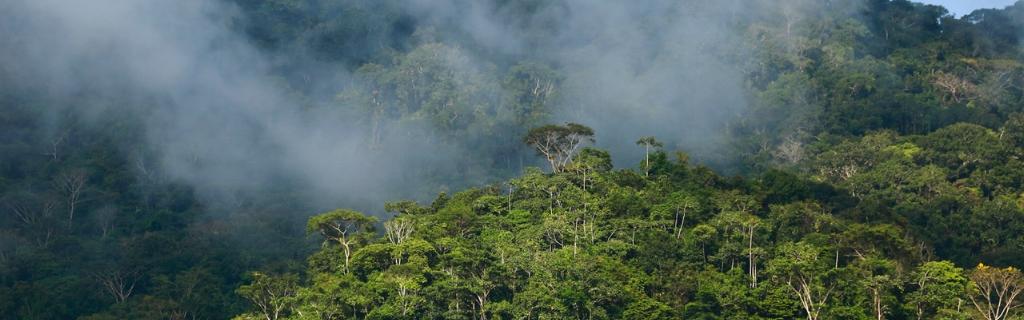 PUR Projet-misty trees-Christian LaMontagne.jpeg