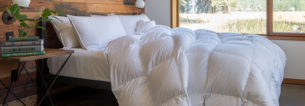 feathered-friends-comforter-v2-1000x350.jpg