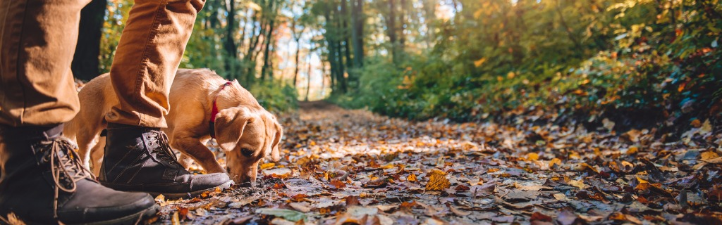 man-hiking-in-autumn-forest-with-dog-picture-id621691690.jpg