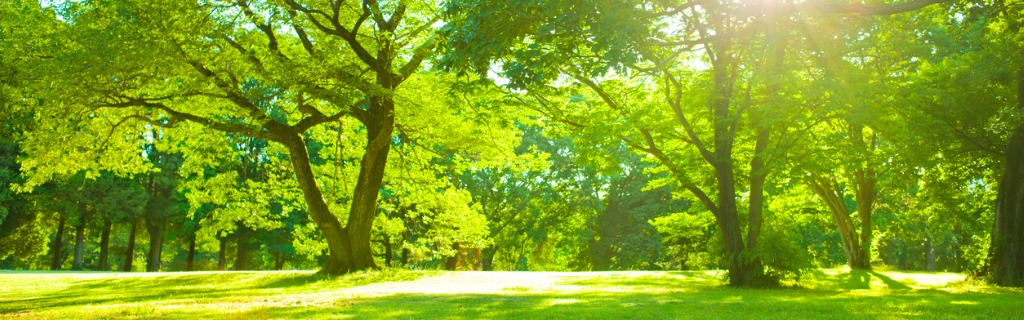 garden-sunlight-picture-id952004838.jpg