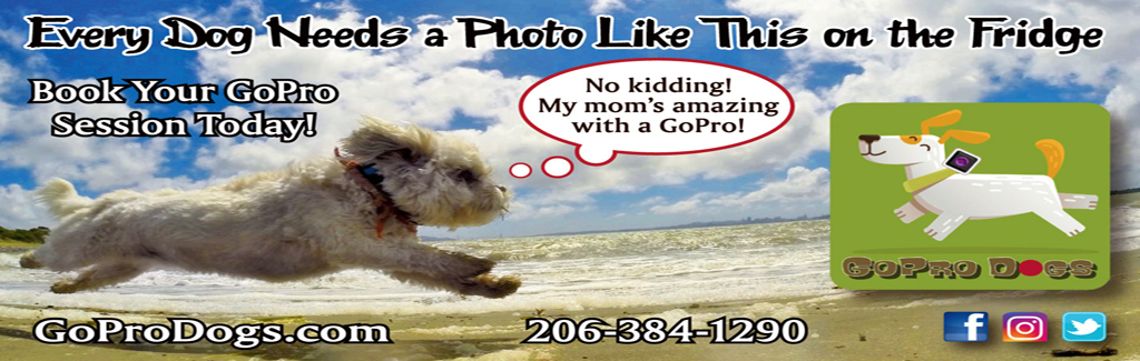 GoPro Dogs Thematic Email Display Ad April 2019 BAY.jpg