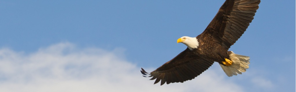 bald-eagle-gliding-against-blue-sky-and-white-wispy-clouds-picture-id168511255.jpg