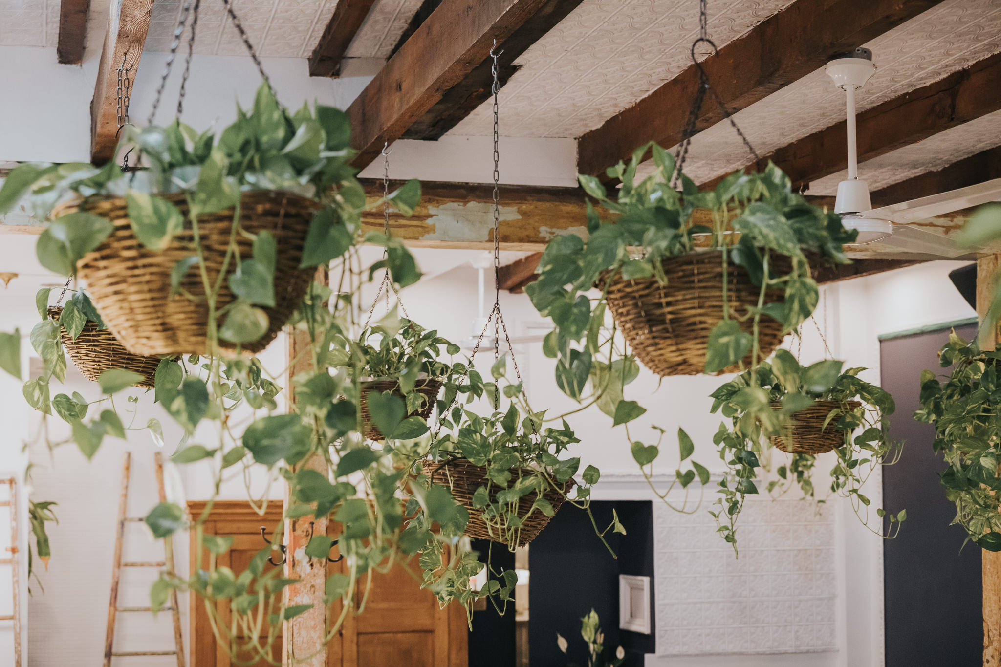 montreal - decor - plants.jpg