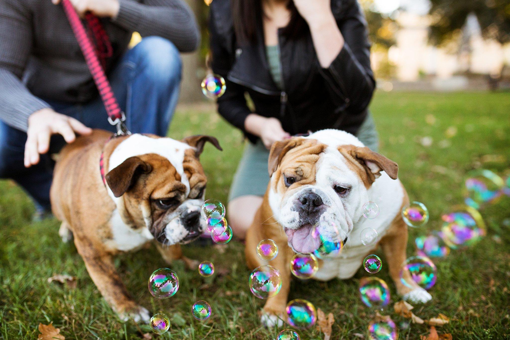 Bulldogs&Bubbles_blog_01.jpg