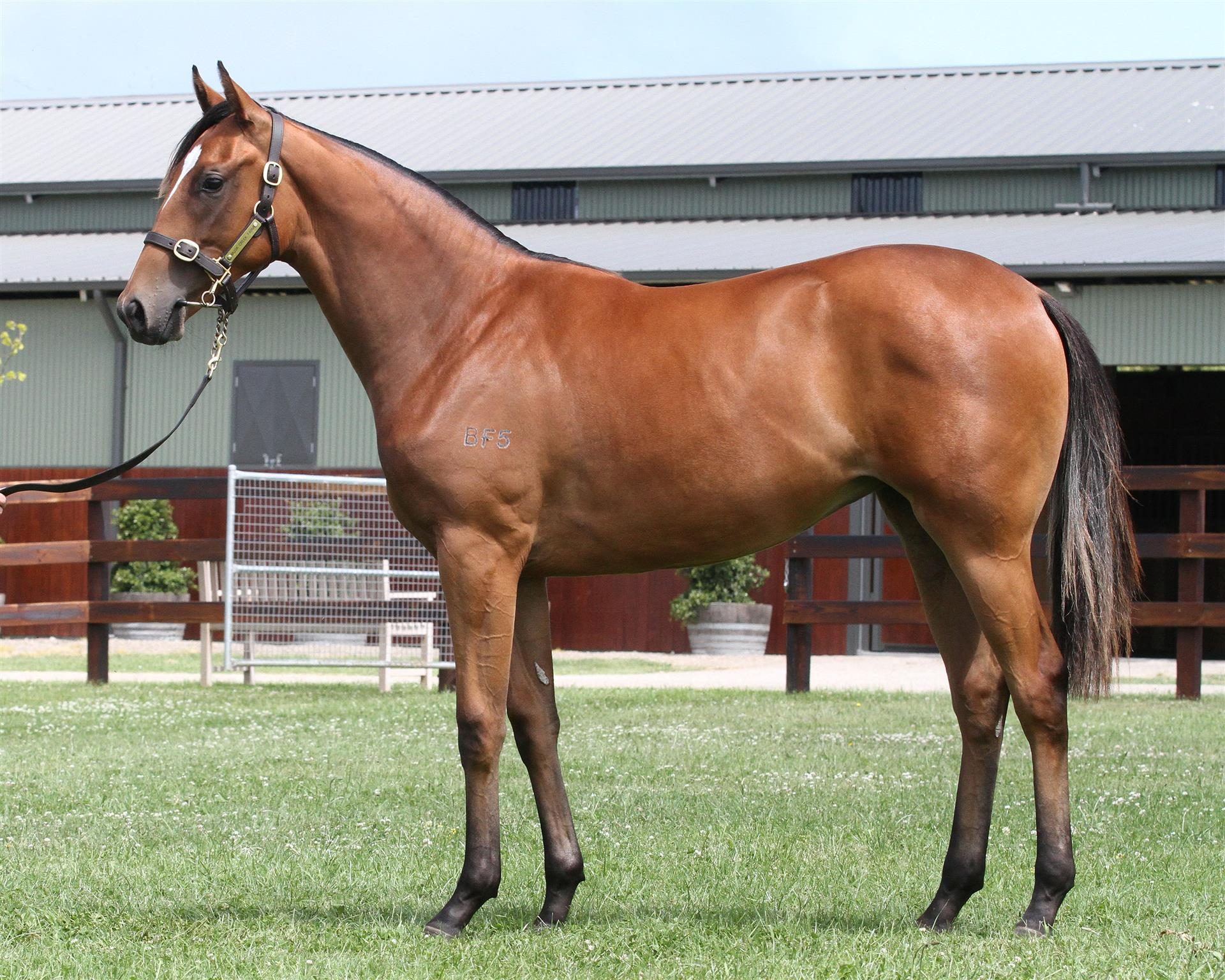Lot 427 Magic Millions Gold Coast - Snitzel x Marsawra