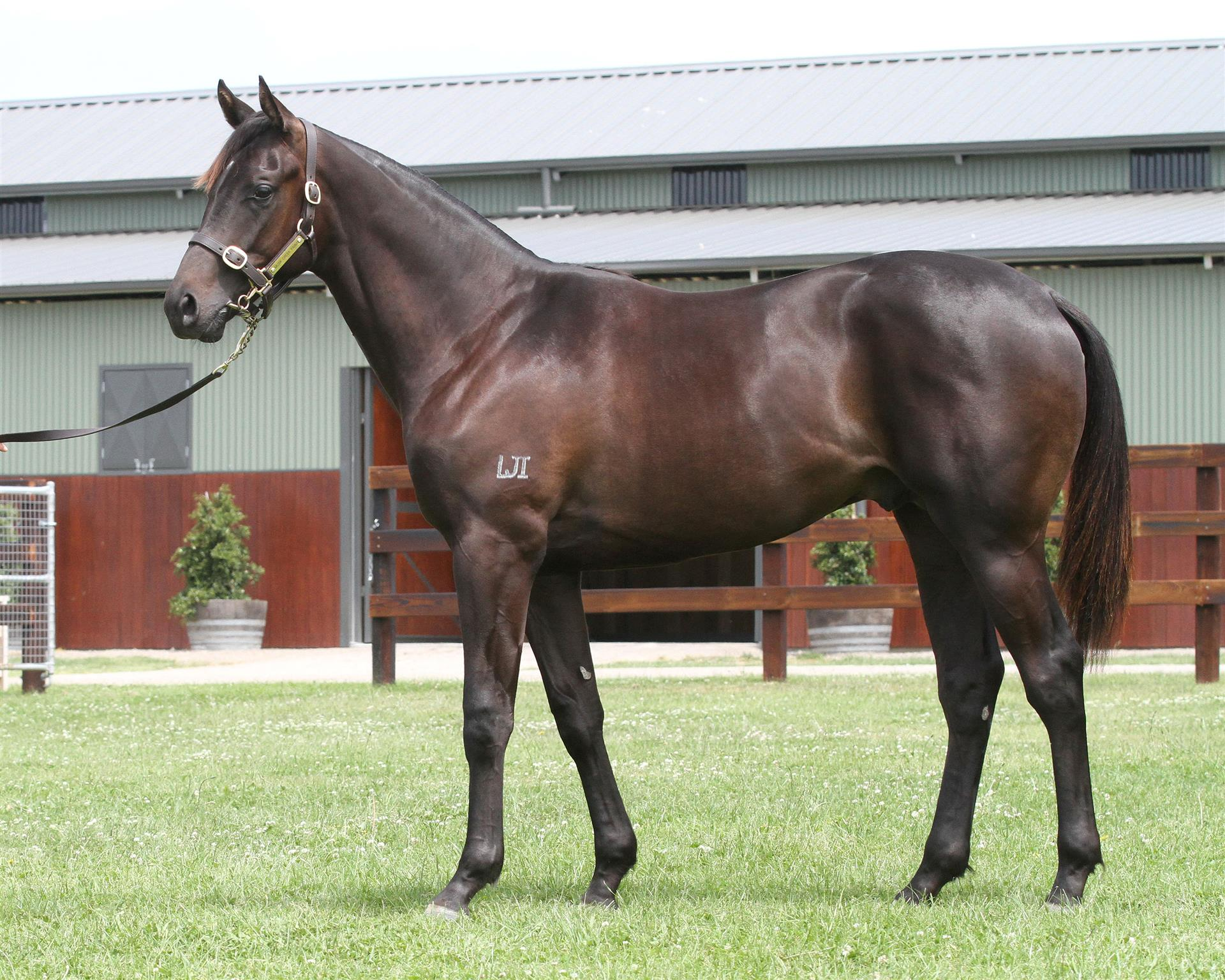 Lot 666 Magic Millions Gold Coast - Foxwedge x Tellora