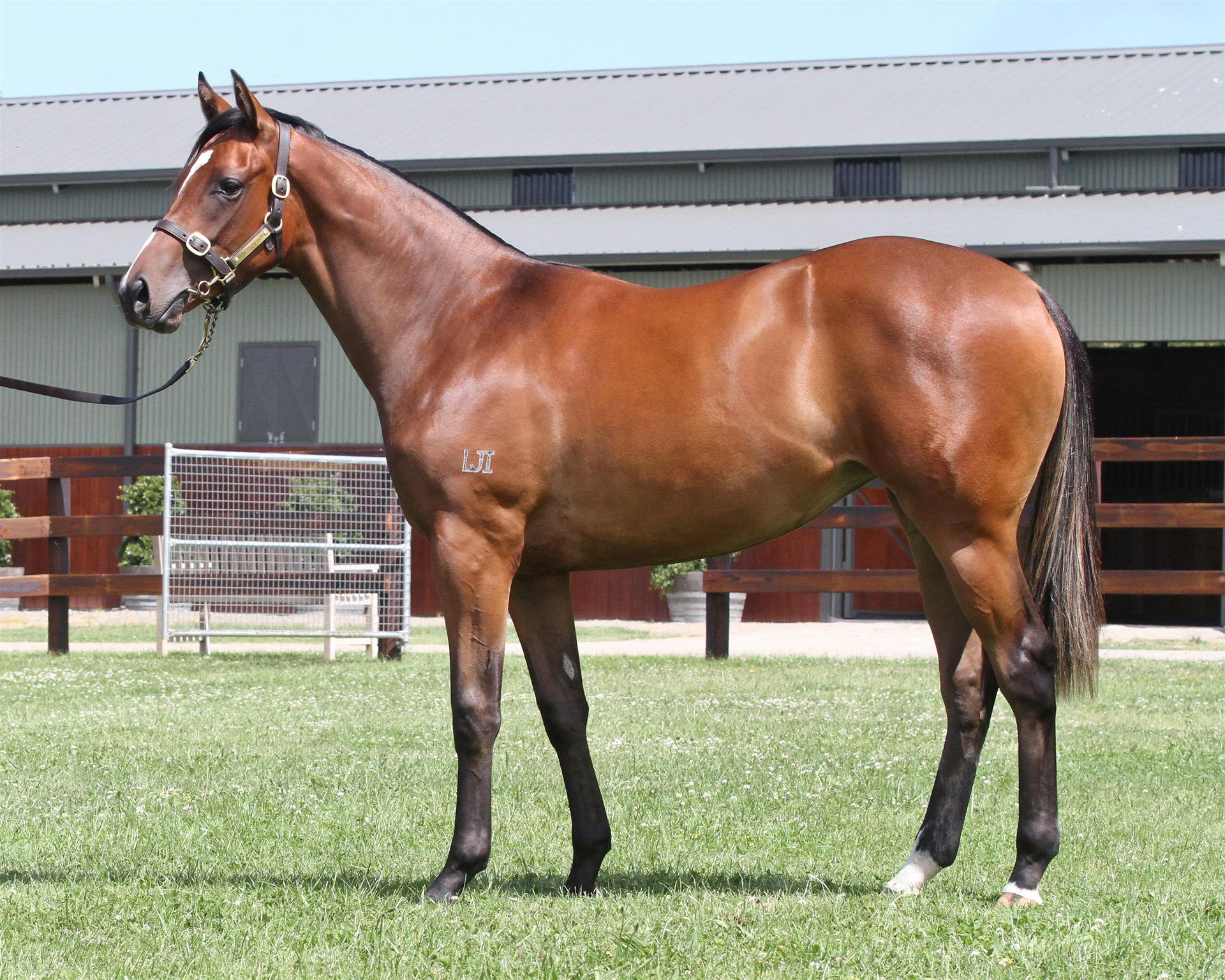 Lot 672 Magic Millions Gold Coast - Smart Missile x Thirst