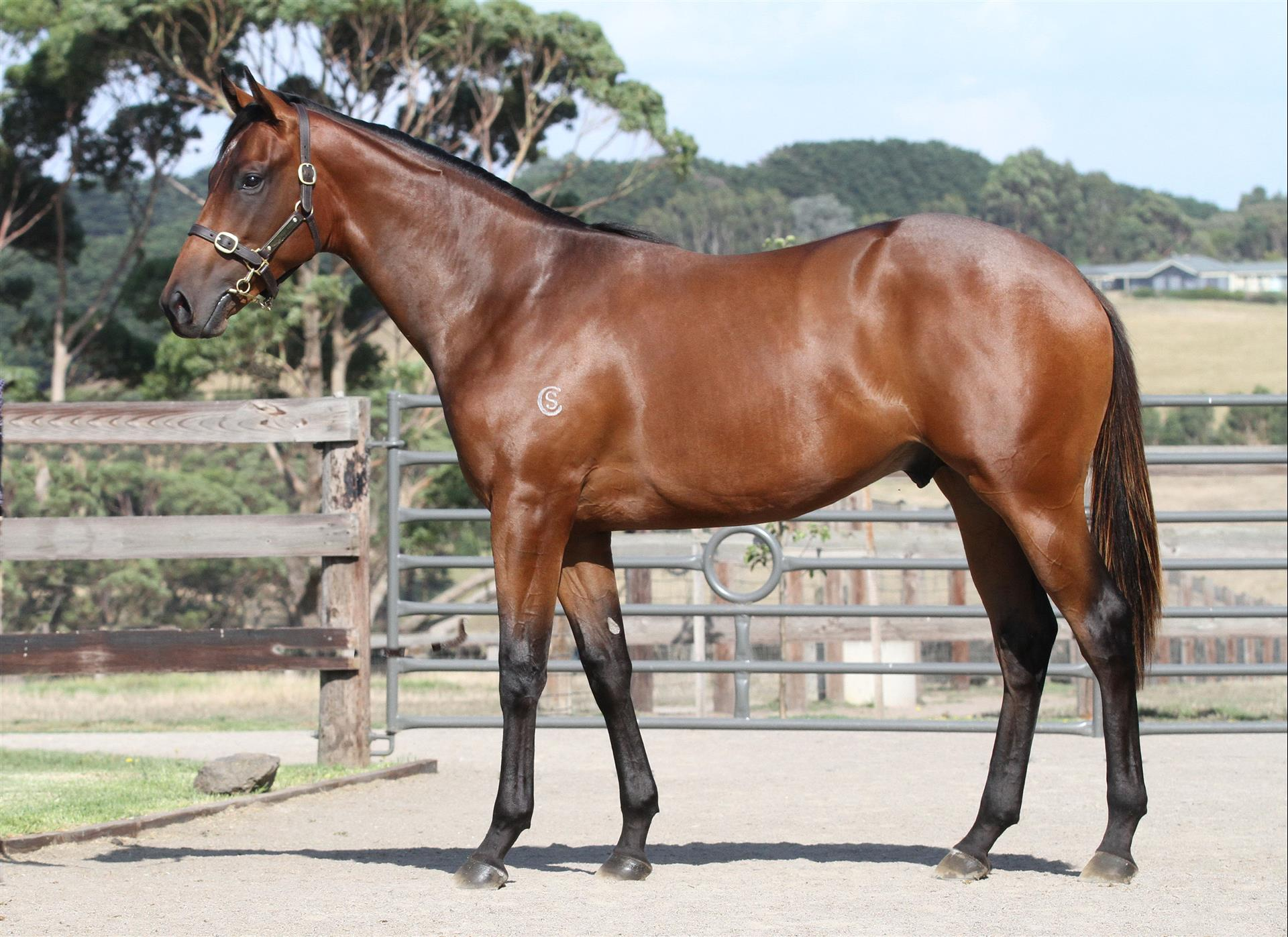 Inglis Premier - Lot 273 Fastnet Rock x Veronica Franco