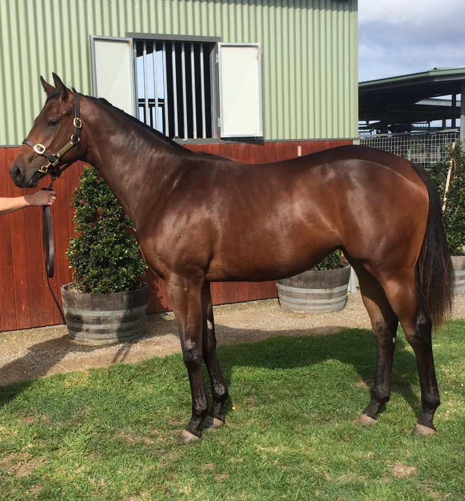 Inglis VOBIS GOLD Sale - Lot 120 Wanted x Lissande