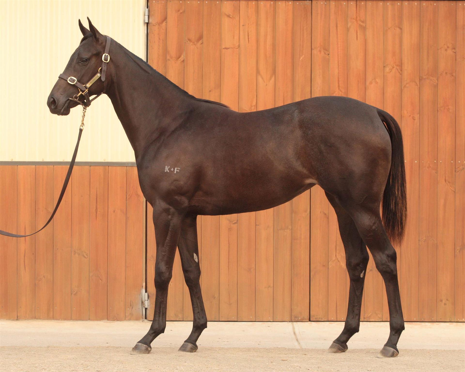 Inglis MPYS Lot 83, All American x Bright Cut