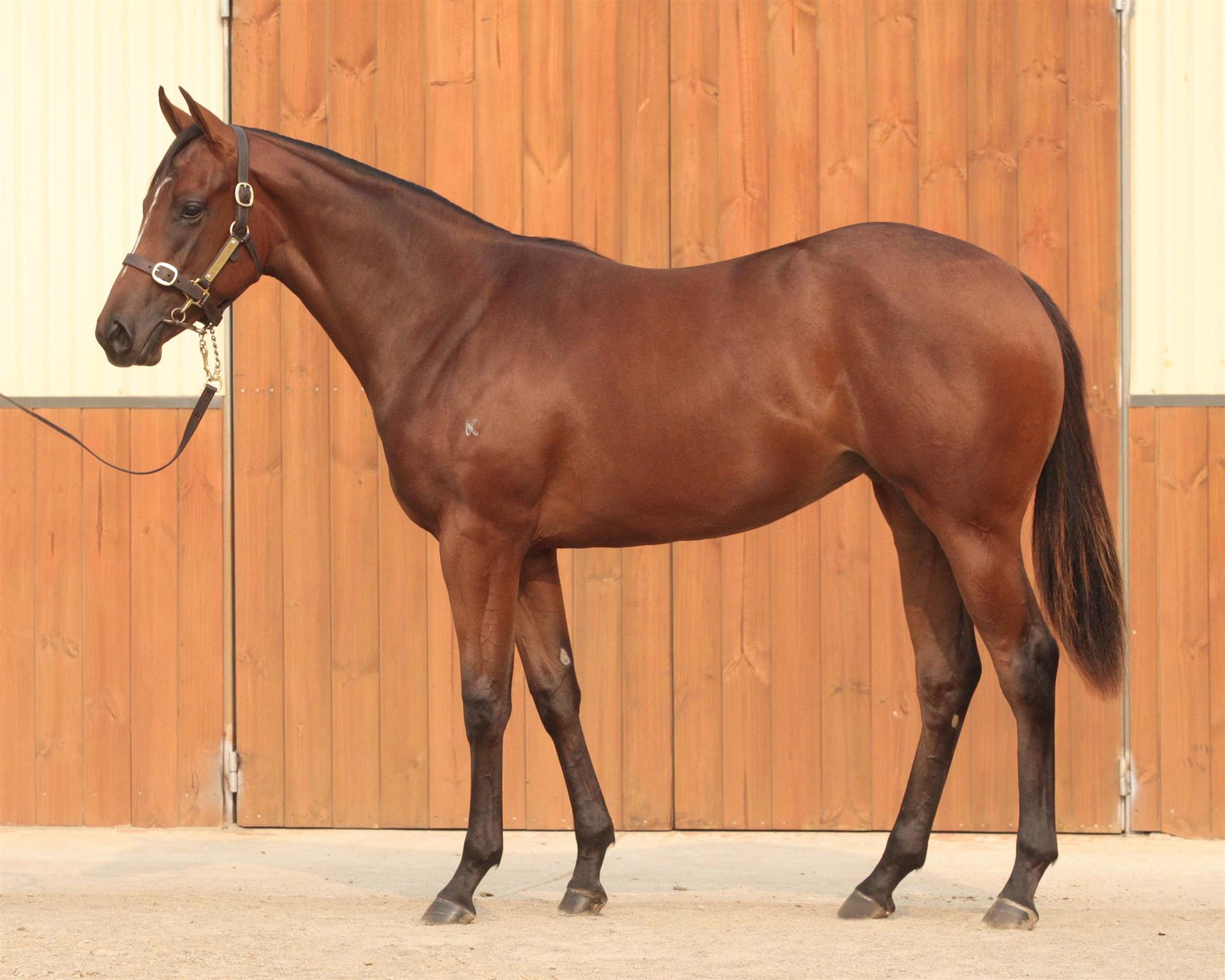Inglis MPYS Lot 476, I Am Invincible x Predestined