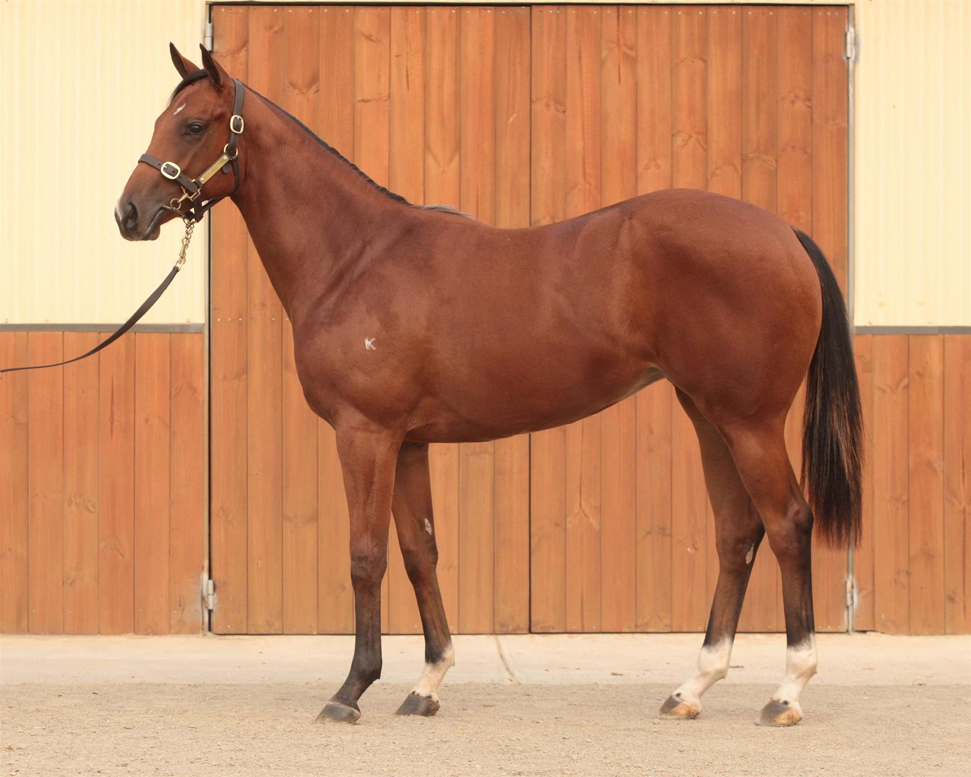 Inglis MPYS Lot 532, Starspangledbanner x Seducation
