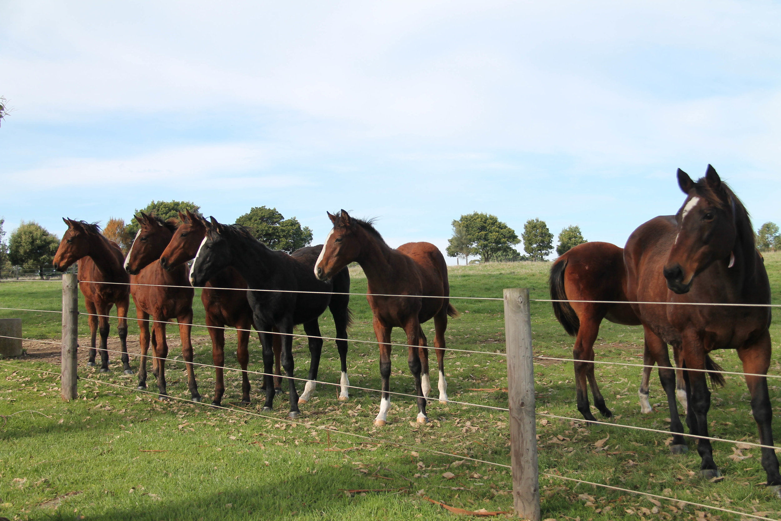 Weanling Fillies.jpg