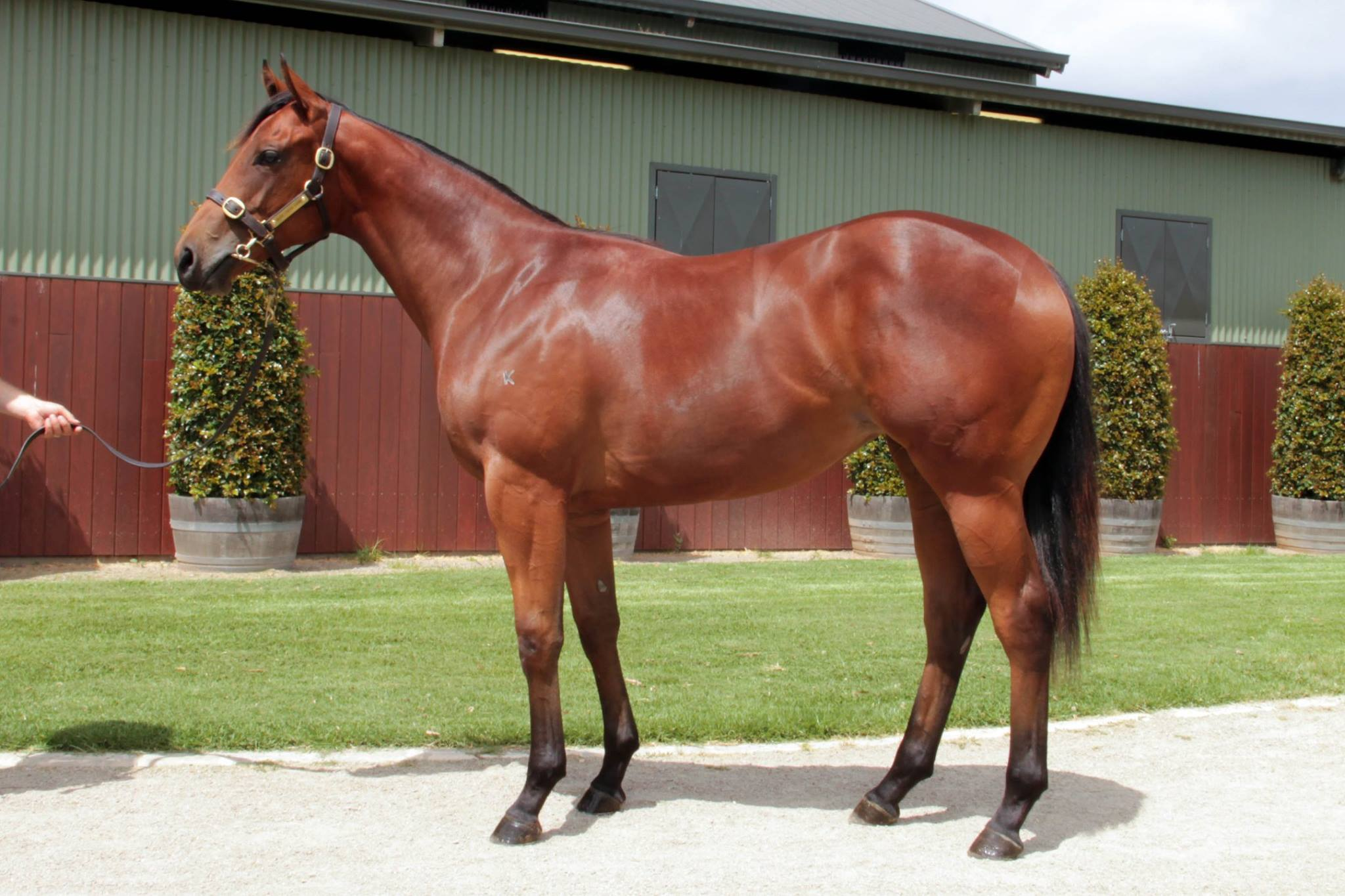 LOT 820  SIRE: I Am Invincible  DAM: If I Can I Can (NZ)  Bay Filly  PURCHASER: Vandyke Racing  PRICE: $475,000.00