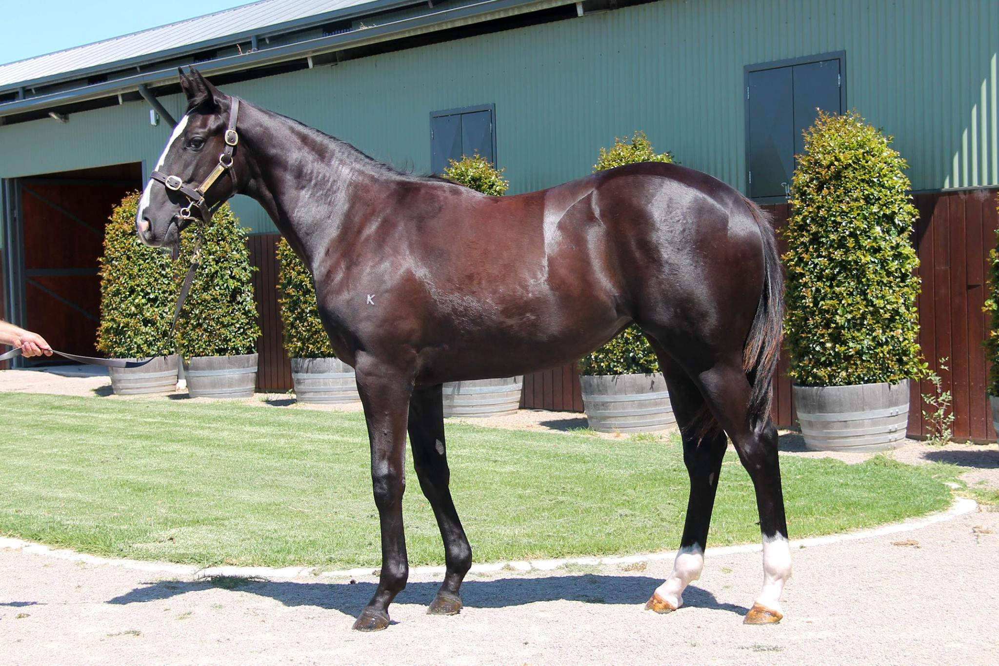 LOT 448  SIRE: Written Tycoon  DAM: Witwatersrand (IRE)  Brown Filly  PURCHASER: Bjorn Baker Racing Pty Ltd  PRICE: $160,000.00