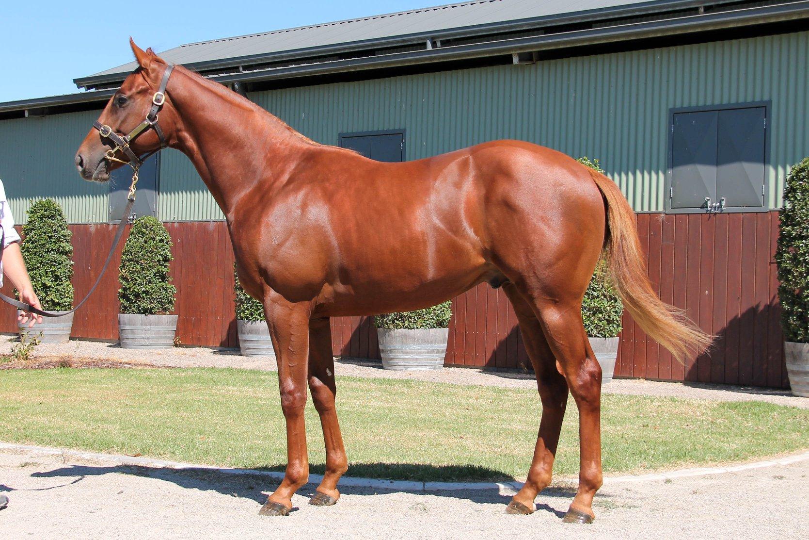 LOT 414  SIRE: Toronado  DAM: Happy Empress  Chestnut Colt  PURCHASER: Craig Carmody Racing Stables NSW  PRICE: $150,000.00