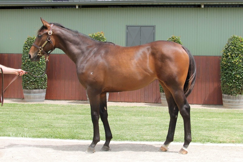 Lot 591 - Pride Of Dubai x Footprint 17 Filly - Passed In Reserve $150,000