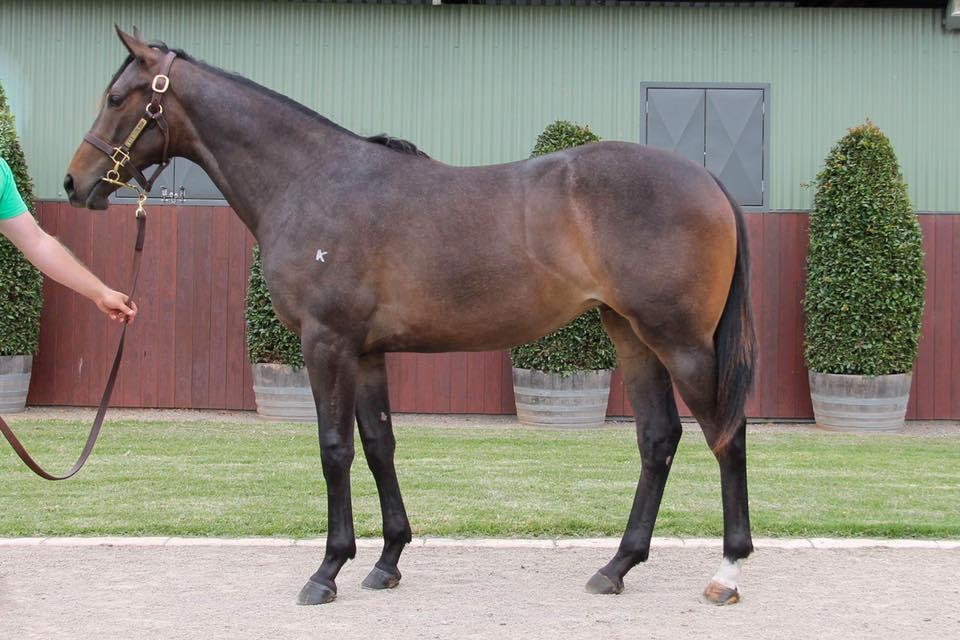 Lot 674 - So You Think (NZ) x If I Can I Can (NZ) 17 Filly - Sold for $100,000 to Gai Waterhouse & Adrian Bott Racing