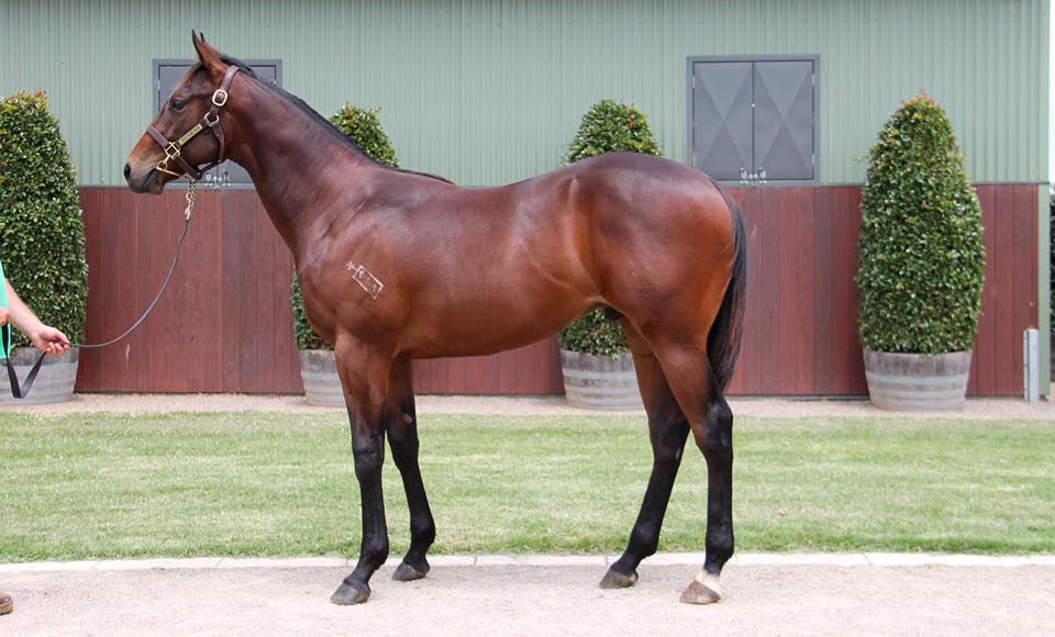 Lot 412 - Spirit Of Boom x Boomalicious 17 Colt - Sold for $300,000 to B K Racing & Breeding