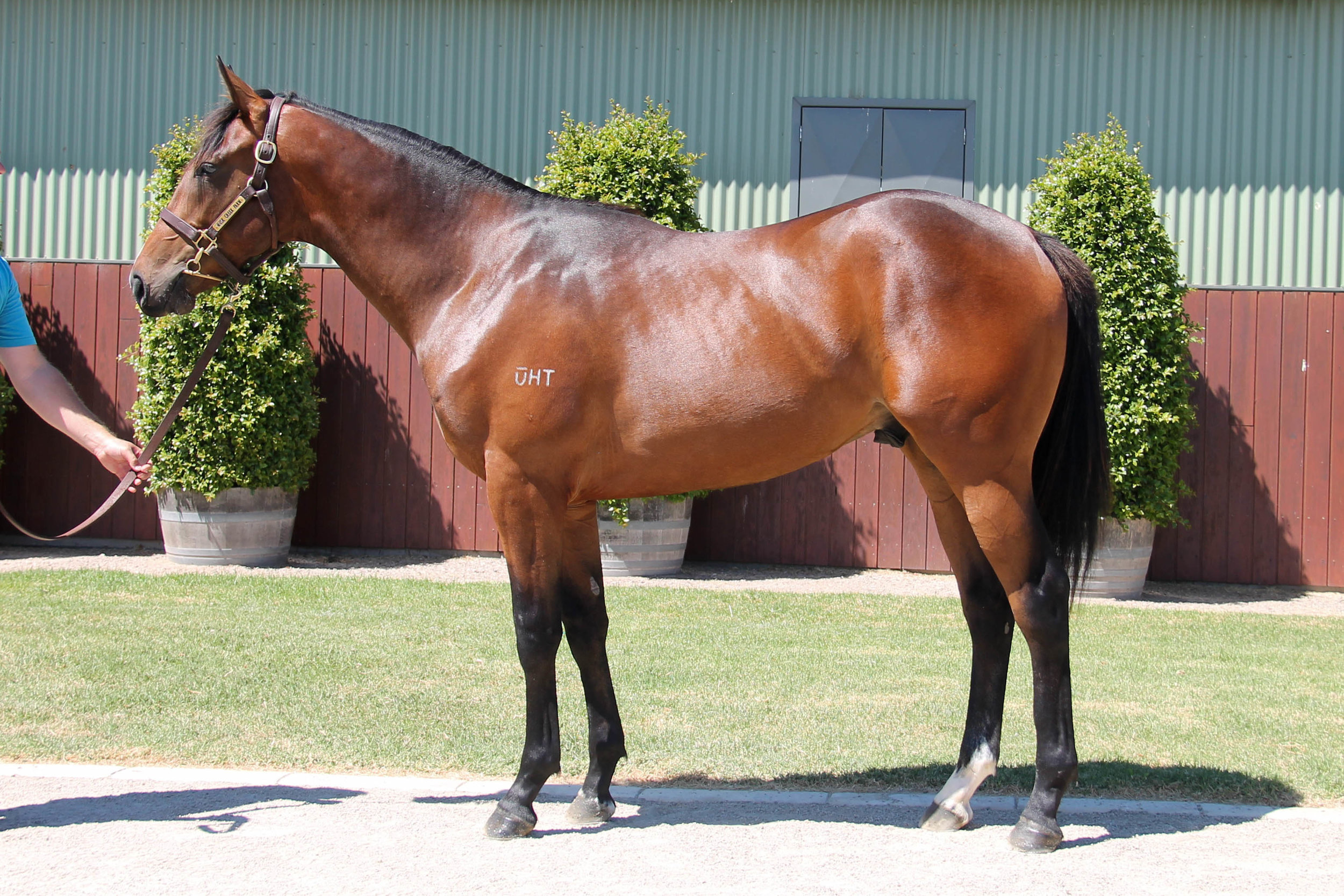 Lot 162 - Epaulette x Bosphoruscence 17 Colt - Sold to Triple Crown Syndications for $80,000