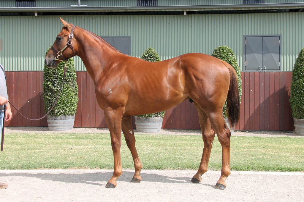 Lot 486 - Rich Enuff x Tapiki 17 Colt - Passed In, Reserve $200,000