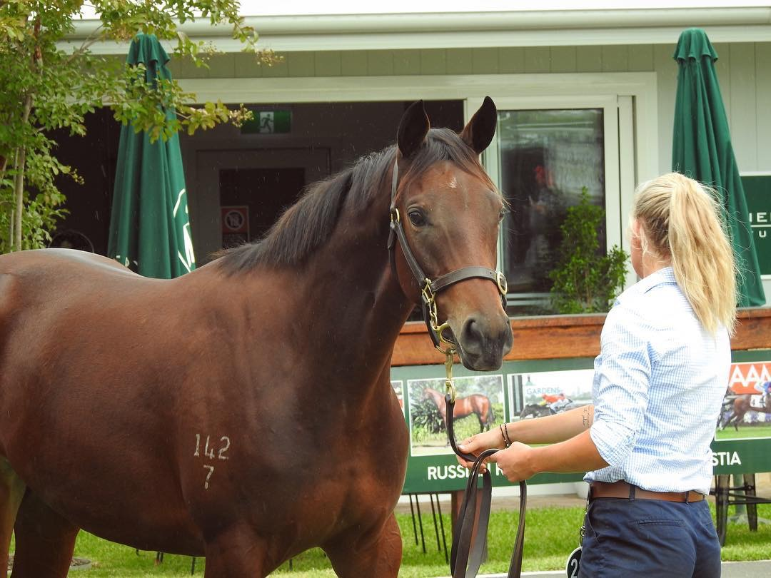 Lot 238 - More Than Ready x Scared Choice filly 3.JPG
