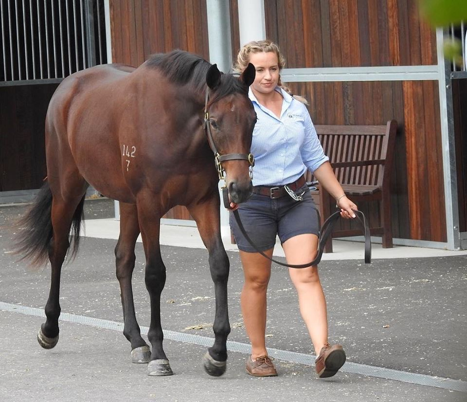 Lot 238 - More Than Ready x Scared Choice filly 2.JPG