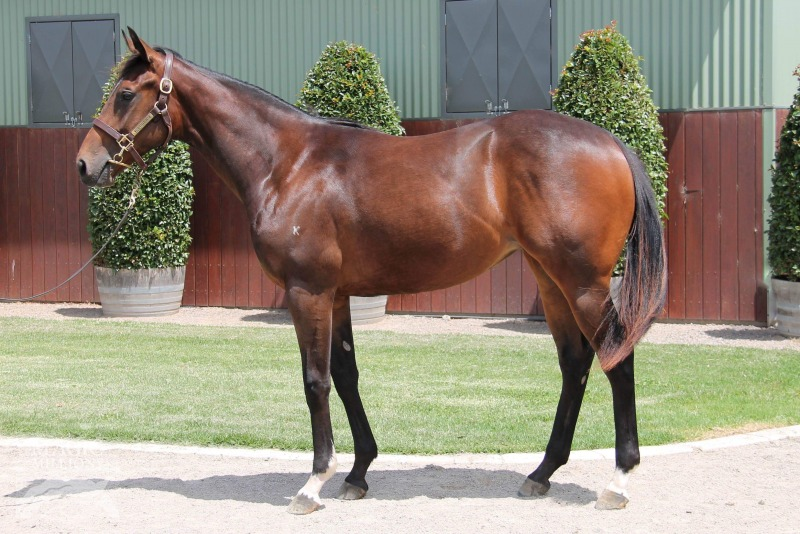 Lot 243 - Vancouver x Grand Excess 17 Filly - Sold to D Romanelli for $30,000