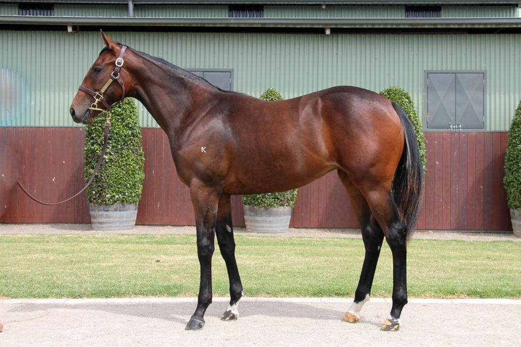 Lot 251 - Written Tycoon x Sublimity 17 Filly - Sold to Matthew Brown Racing for $34,000