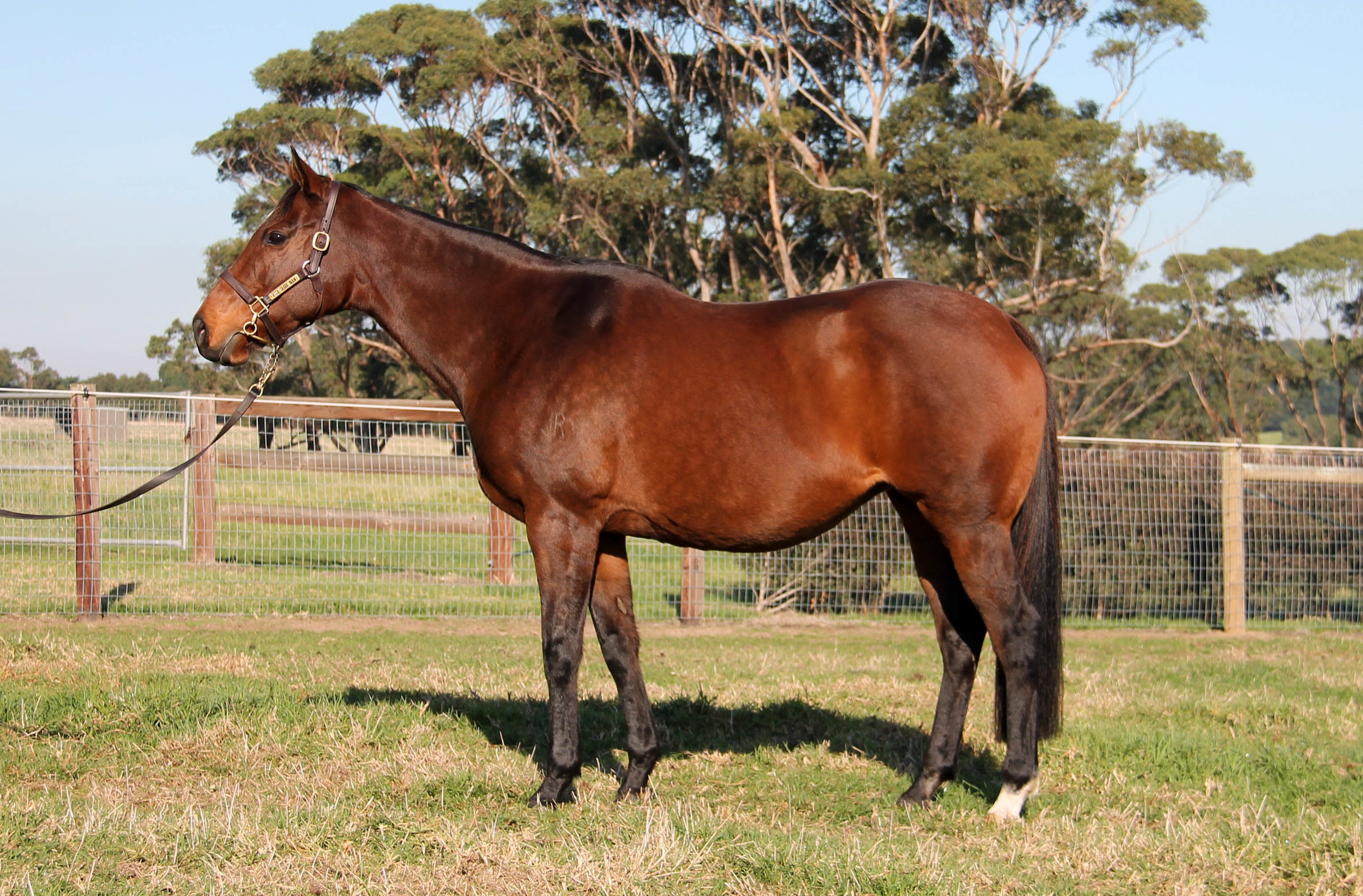 Lot 1595 - Sublimity - In Foal to Spirit Of Boom
