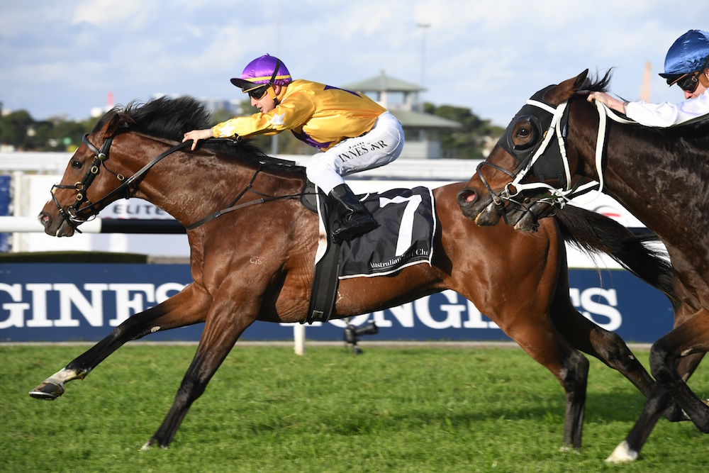 Hush Writer won first up over 2400m (pic: Steve Hart)