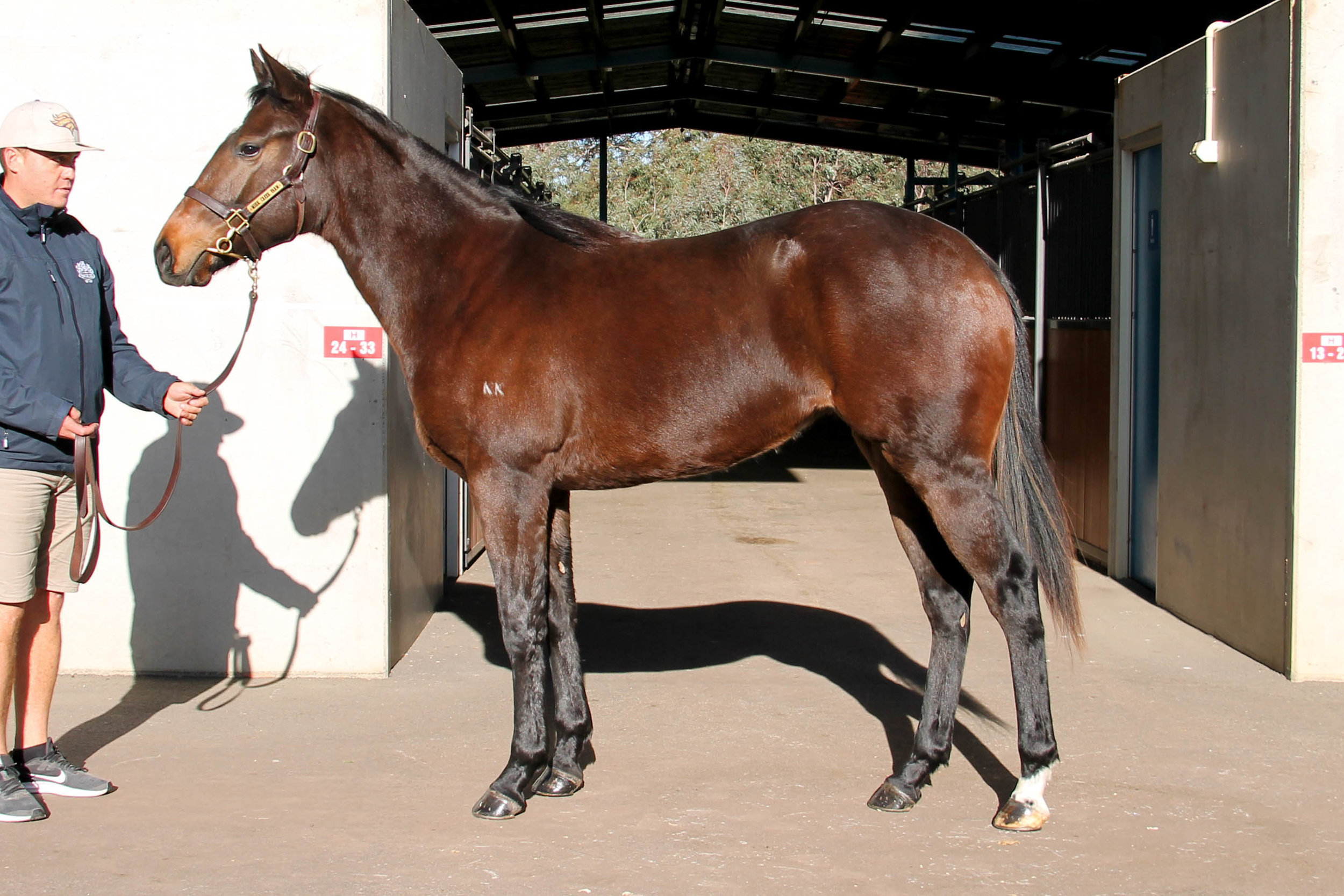 Lot 821 - Statue Of Liberty (USA) x Finishing School (GB) 2017 Filly - Withdrawn at Sale