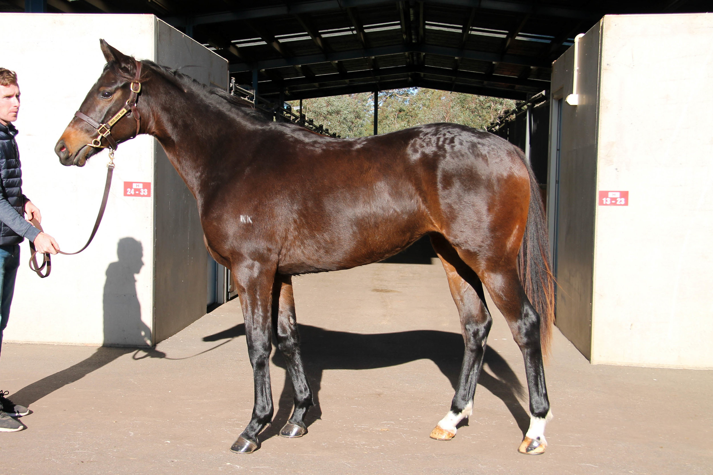 Lot 820 - Statue Of Liberty (USA) x Mithali 2017 Filly - Withdrawn at Sale