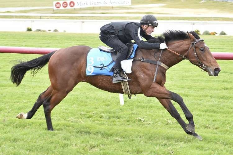 Lot 39 - Unencumbered x Choose Wisely (colt) breezed in 10.63s