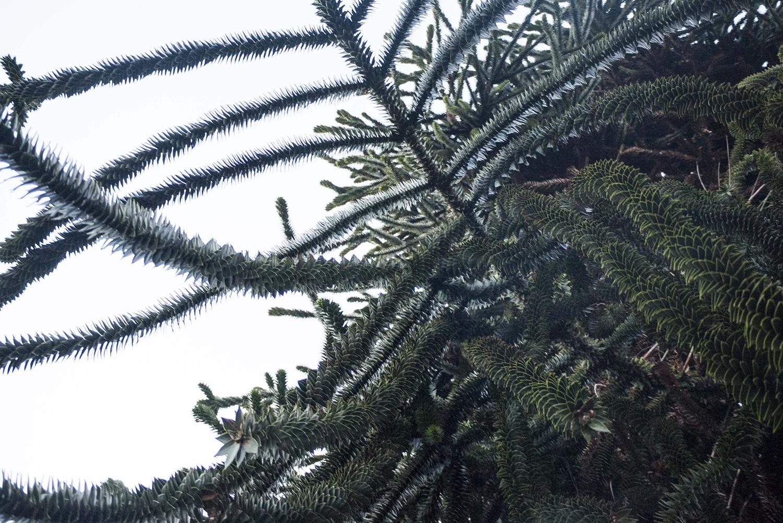 trees_5.jpg