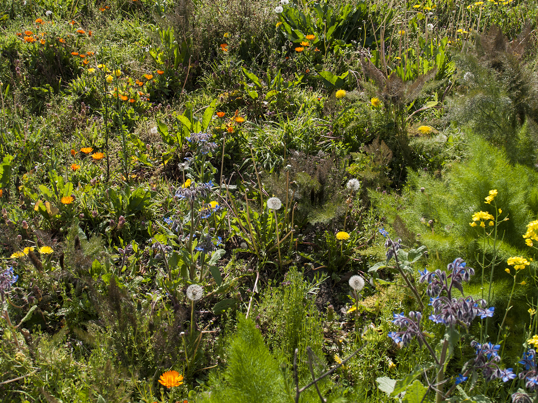 springfieldsun_3.jpg