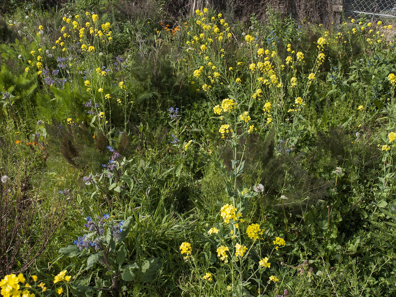 springfieldsun_7.jpg
