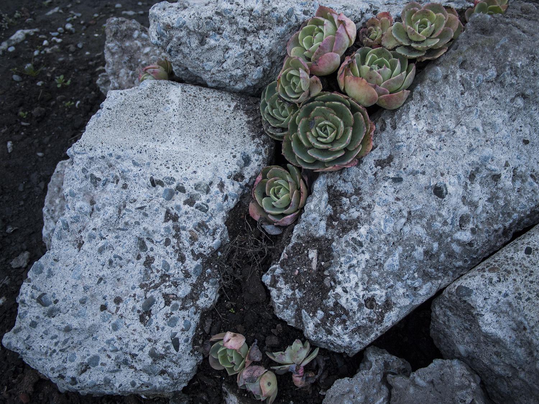 succulent_2.jpg